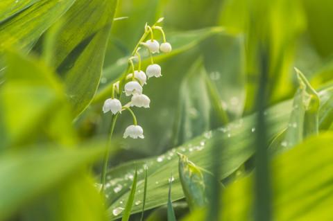 bloemen meiklokjes